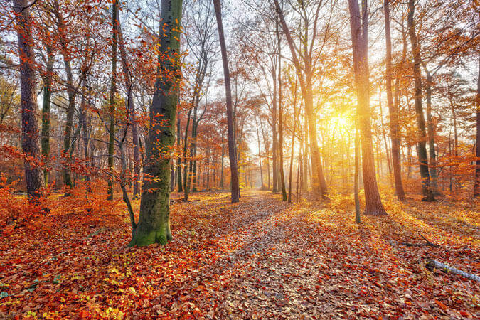Top 5 Places to visit in Norfolk this Autumn